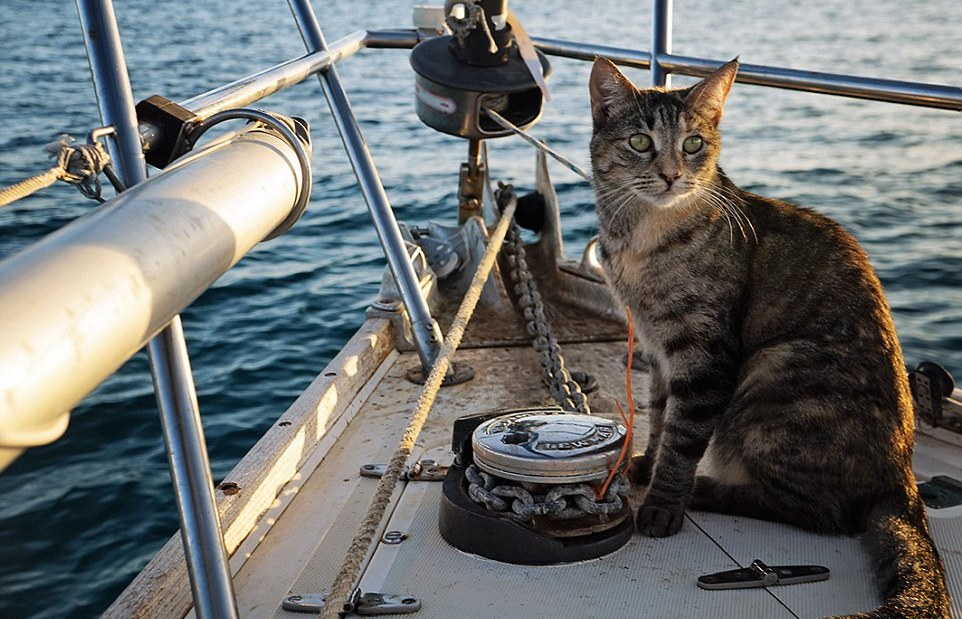 A bord d'un voilier avec un chat