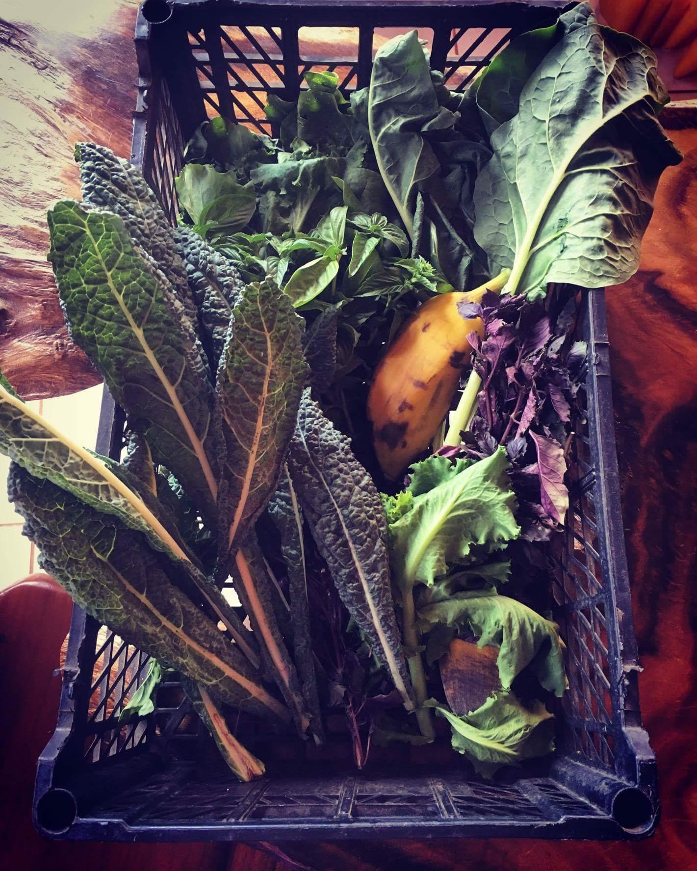 fruits et legumes communauté de permaculture