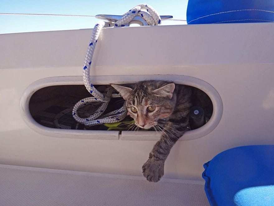 sur un voilier avec un chat voyage