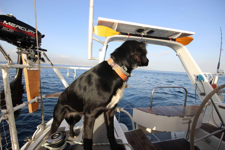 vivre sur un voilier avec un chien