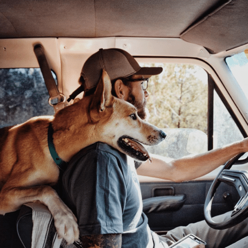 Vivre avec un chien dans un van, un camion aménagé ou un camping-car
