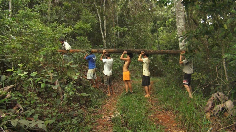 forêt brésil écovillage