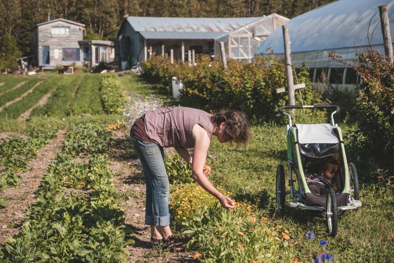 communauté coopérative agricole