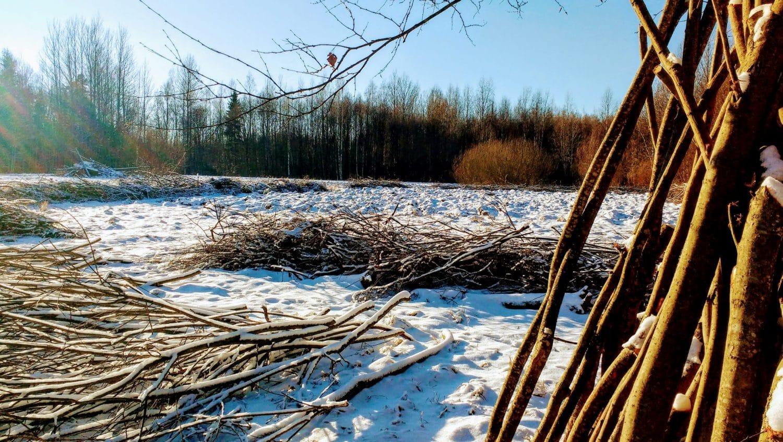 vivre en autonomie dans les bois