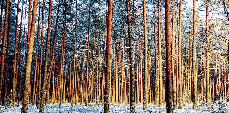 vivre en autonomie dans la forêt
