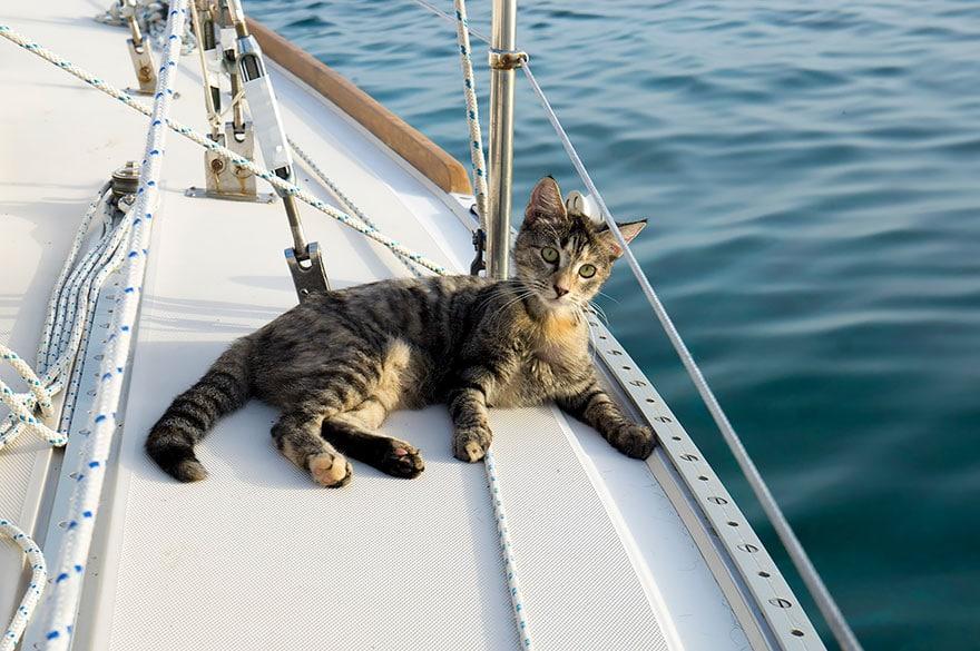 sur un voilier avec un chat