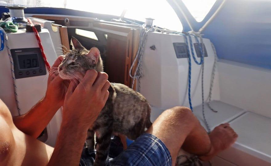 voilier avec un chat tour du monde