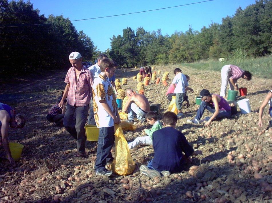 Longo Maï agriculture élevage