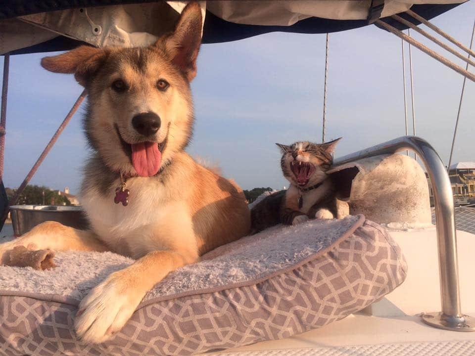 vivre en voilier avec un chien ou un chat