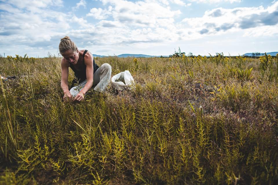 cueillette de plantes sauvages