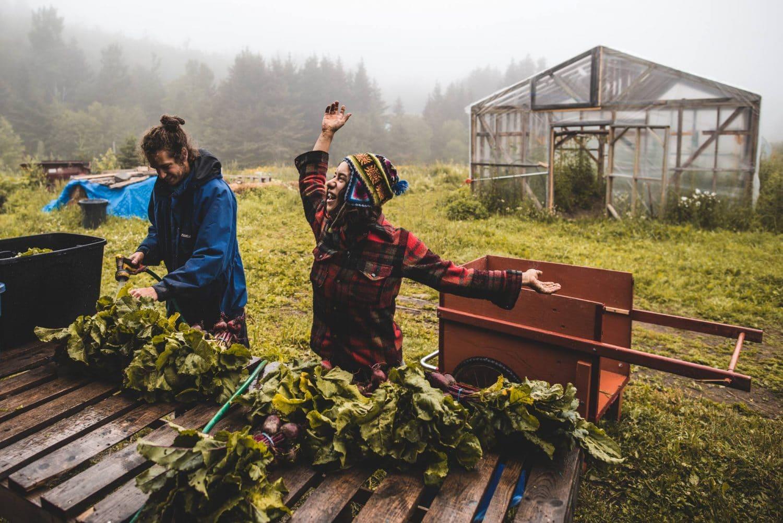 communauté permaculture