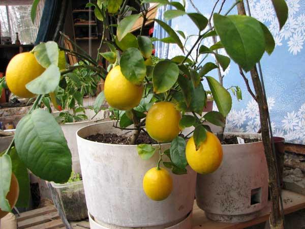earthship serre fruits et légumes