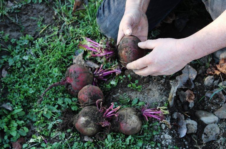 alimentation durable et locale