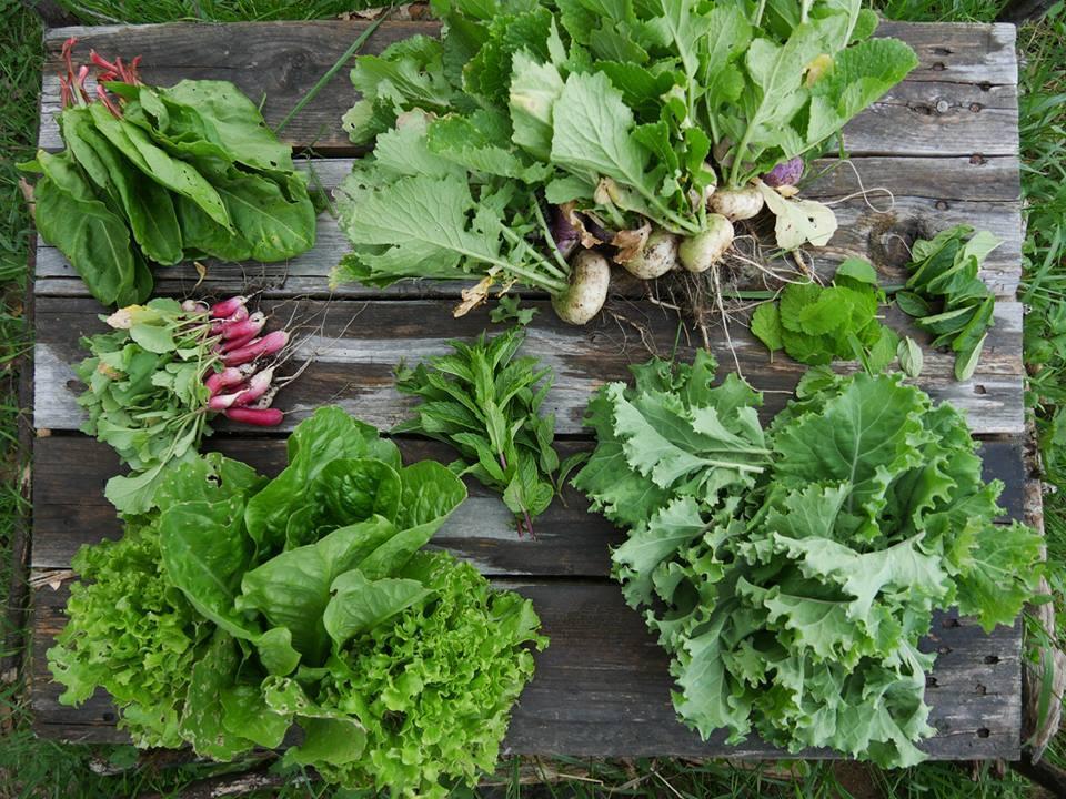 alimentation durable saine