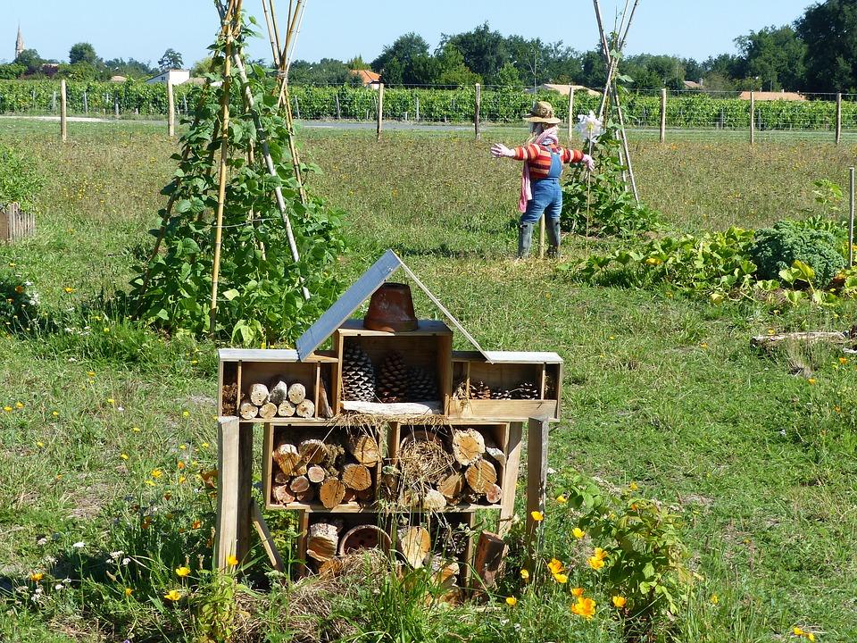 Débuter en permaculture : 3 conseils faciles de base pour commencer