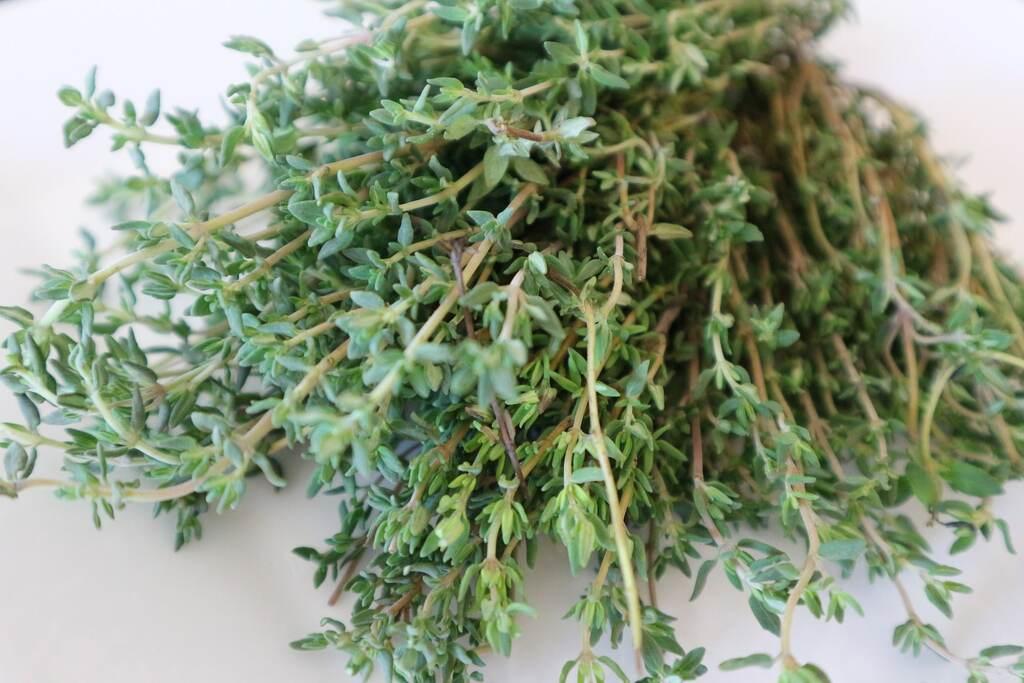 thym herbe médicinale