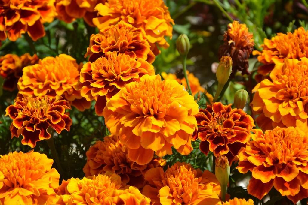 protéger potager fleurs