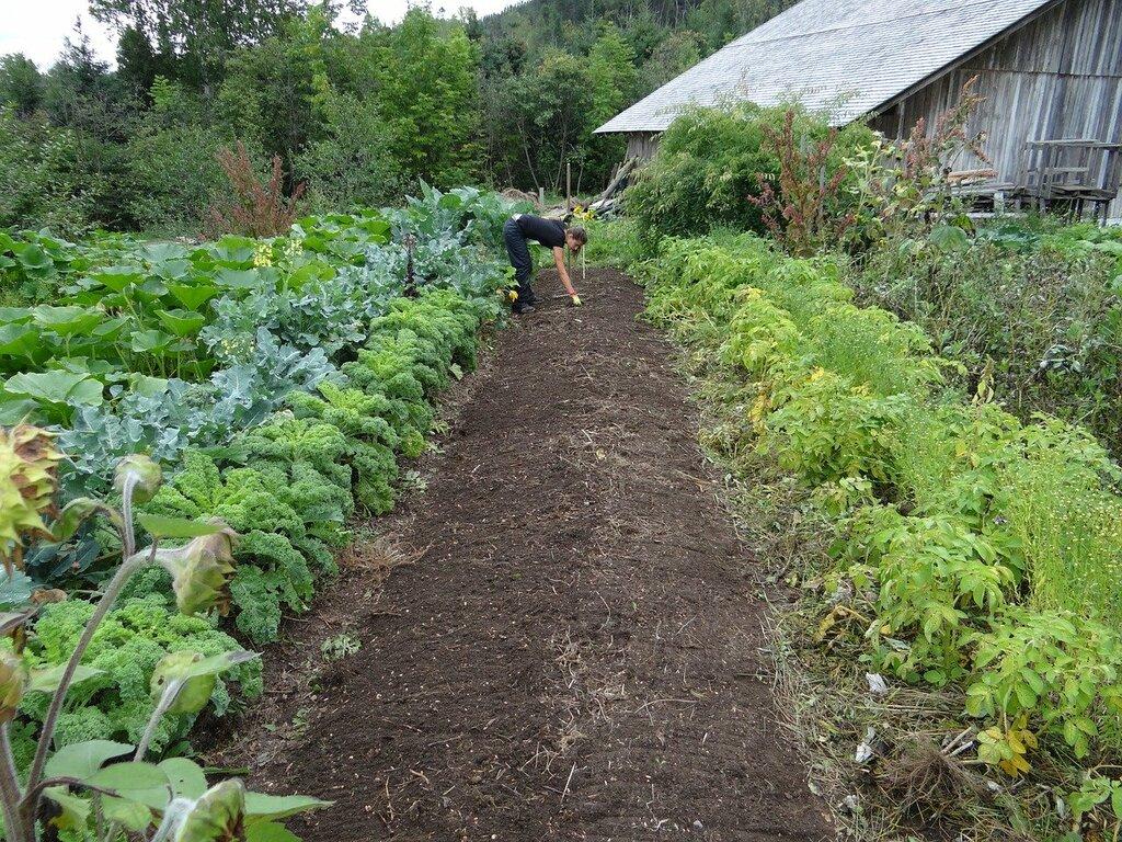 paillage jardin