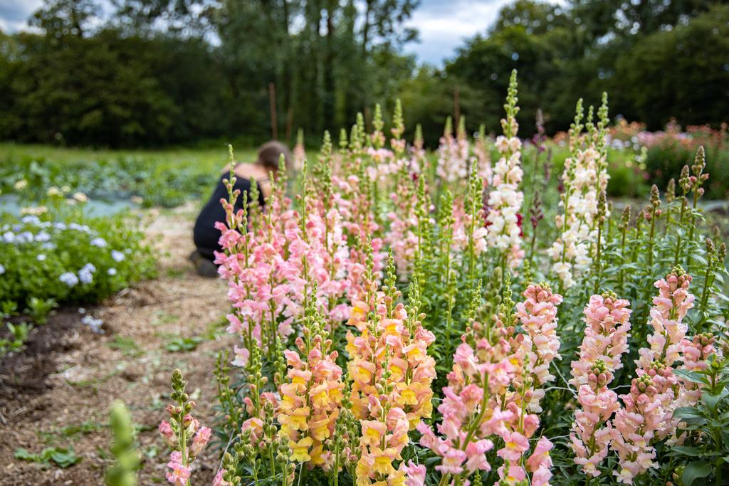 fleurs locales bretagne
