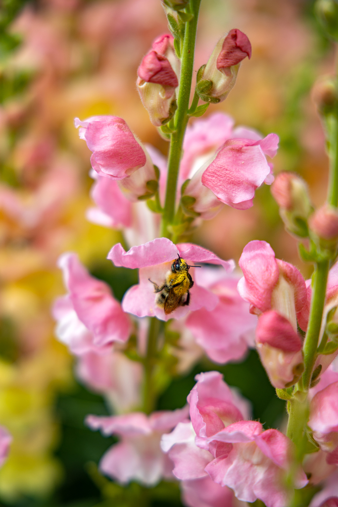 fleurs locales zéro déchet
